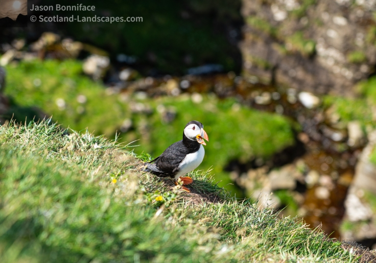 Photo of a puffin with something to say?