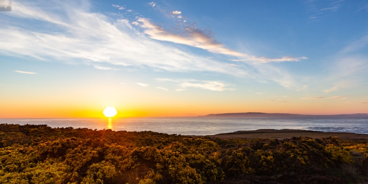 Photo of gorse flowering and sunset over the Pentland Firth