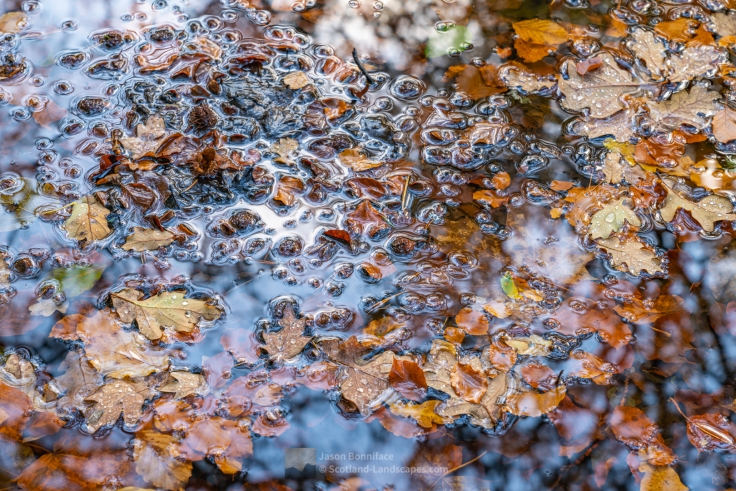 Photo of leaves in a puddle in the woods at Invermoriston